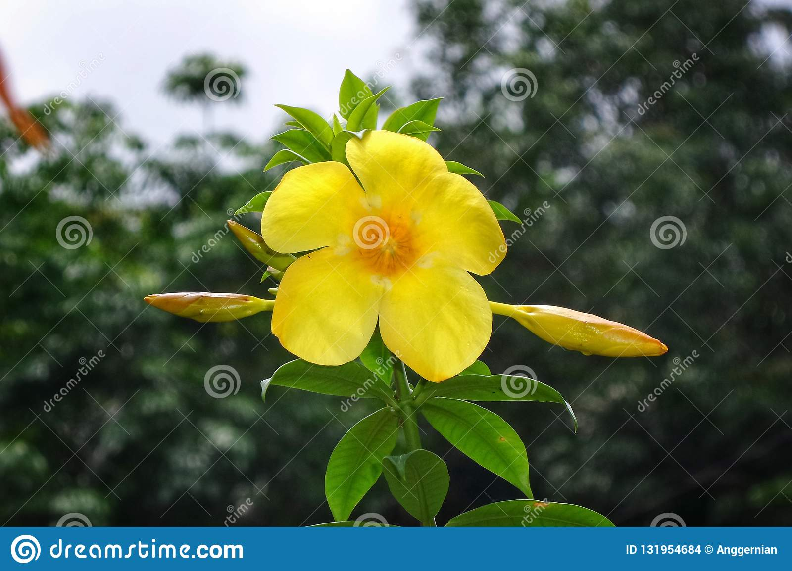 Yellow Flower On The Green Leaves Hd Wallpaper Background