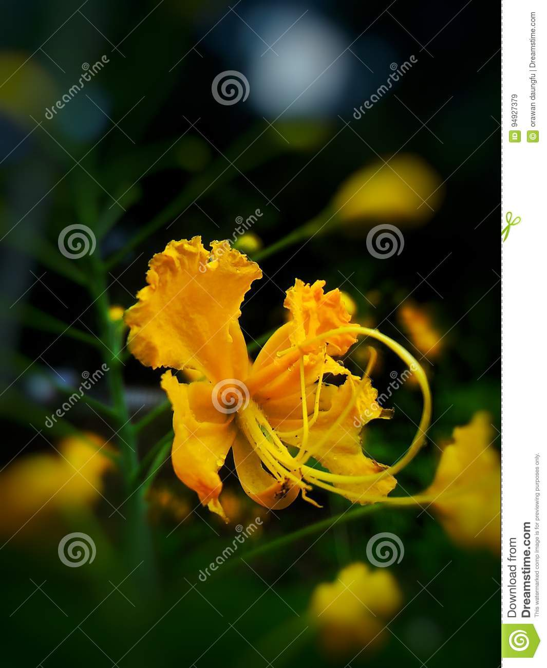 Yellow Flower Stock Image Image Of Tones Annuals Perennials