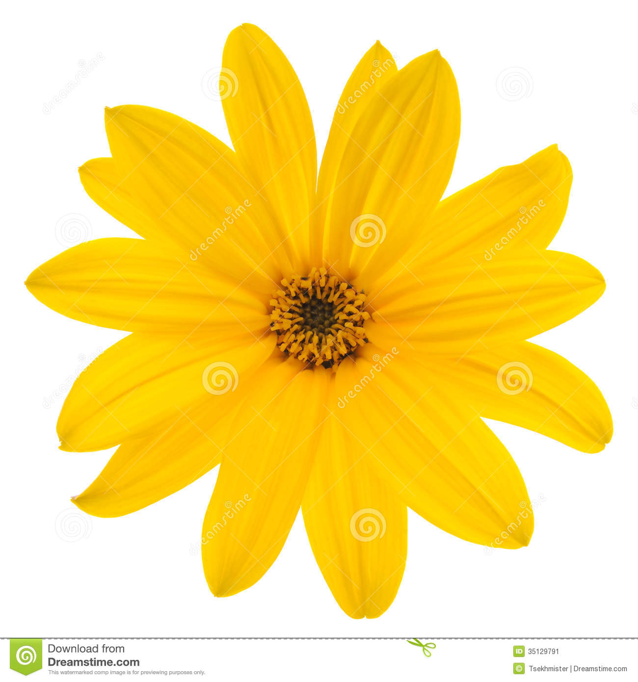 Yellow Flower Stock Image - Image: 35129791