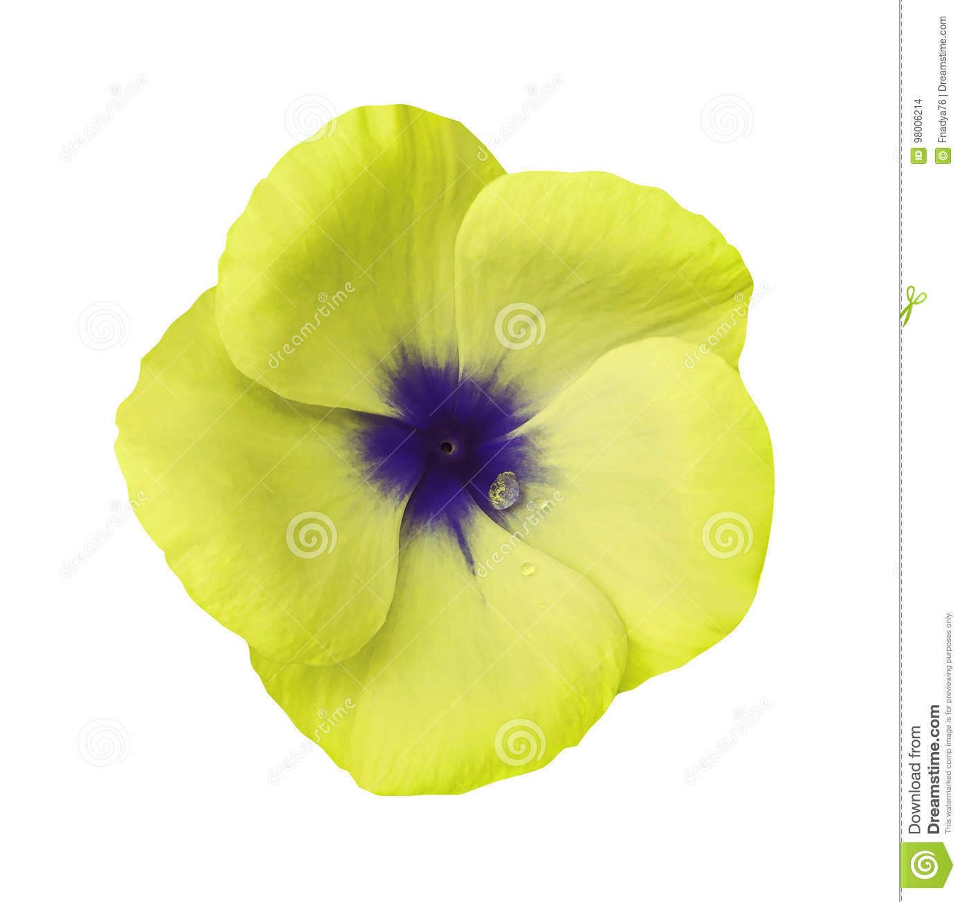 Yellow Flower On Isolated White Background With Clipping Path