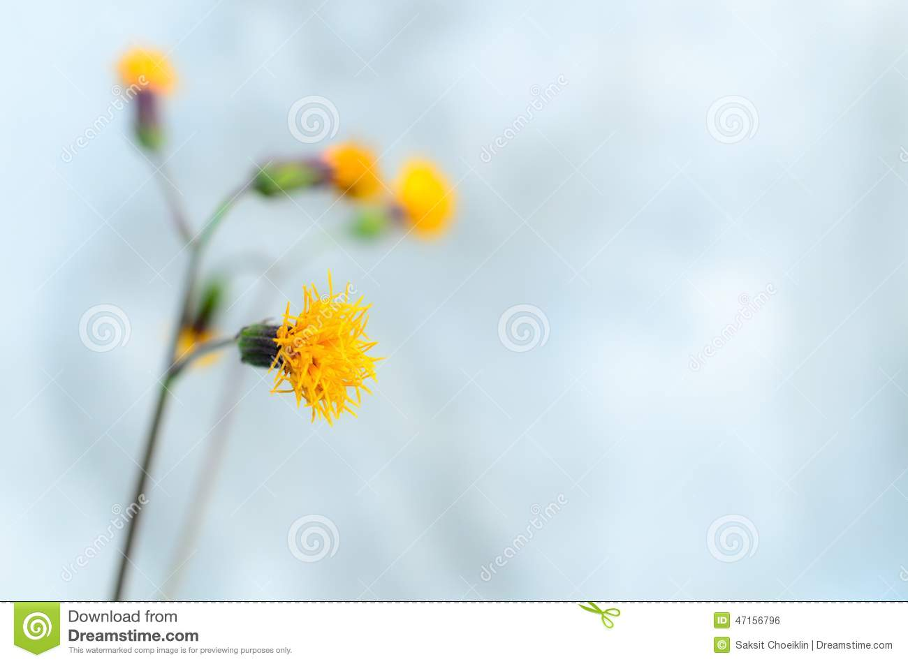 yellow flower on light blue pastel background stock photo