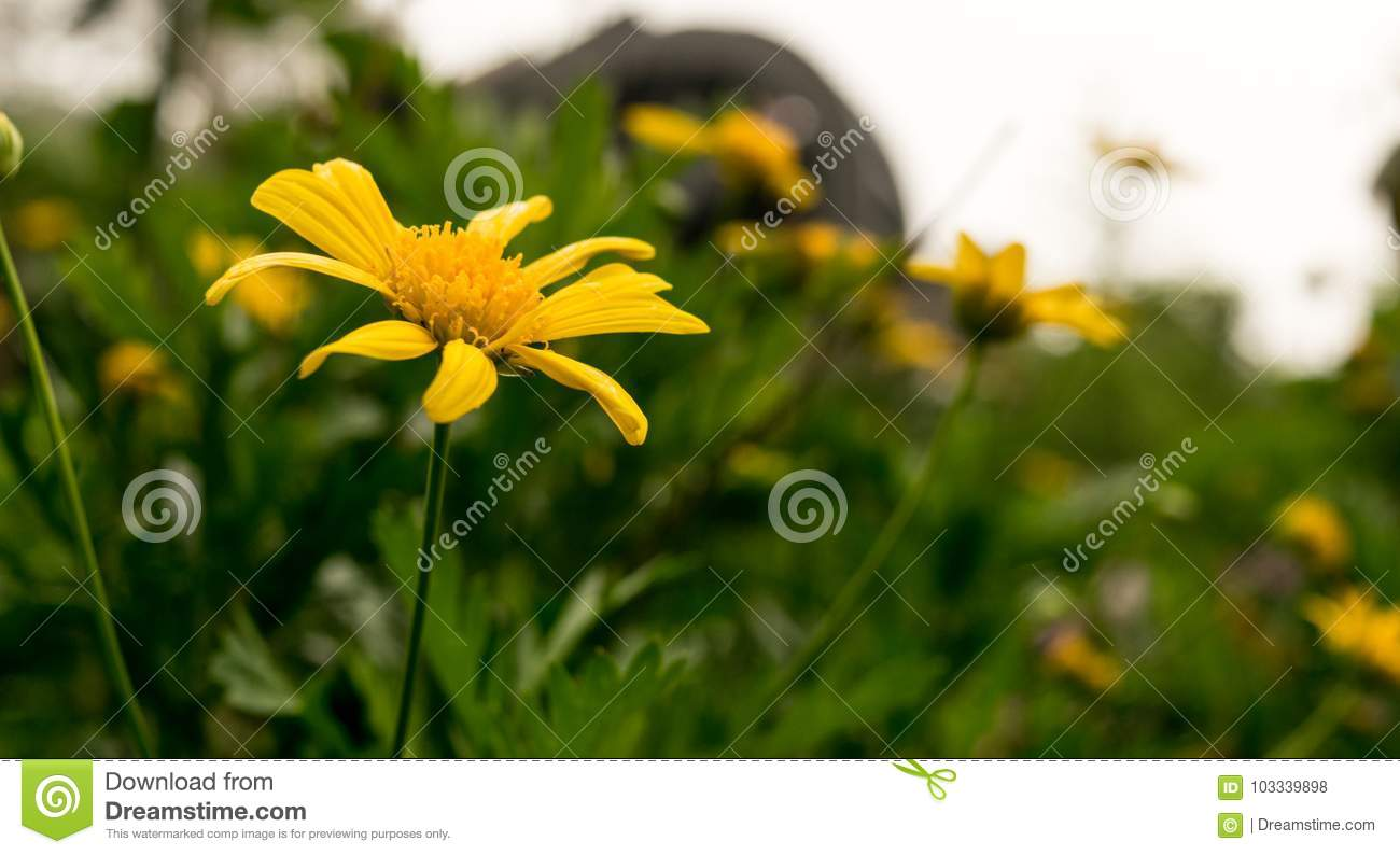 Yellow Flower In The Meadow Stock Photo Image Of Rest Yellow