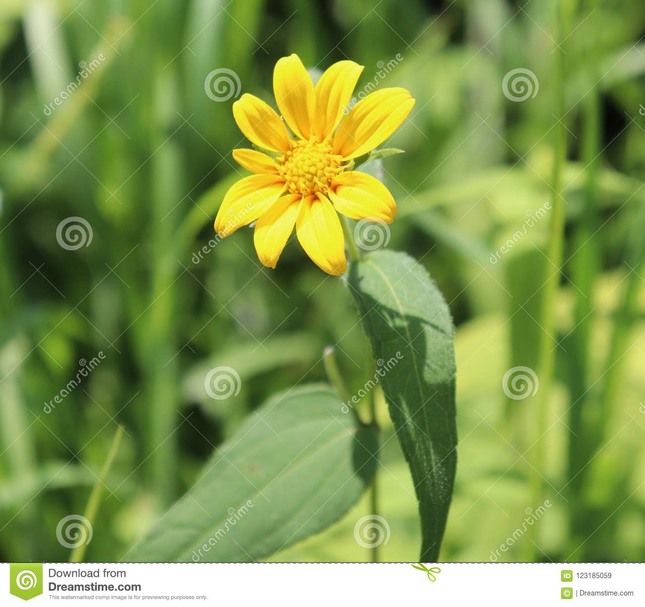 Yellow Flower Outside Blurry Background Stock Image Image Of