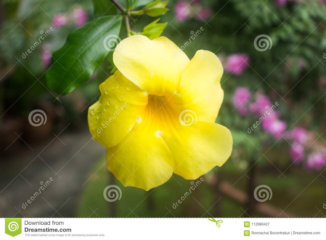 Yellow flower with raindrops on blur background