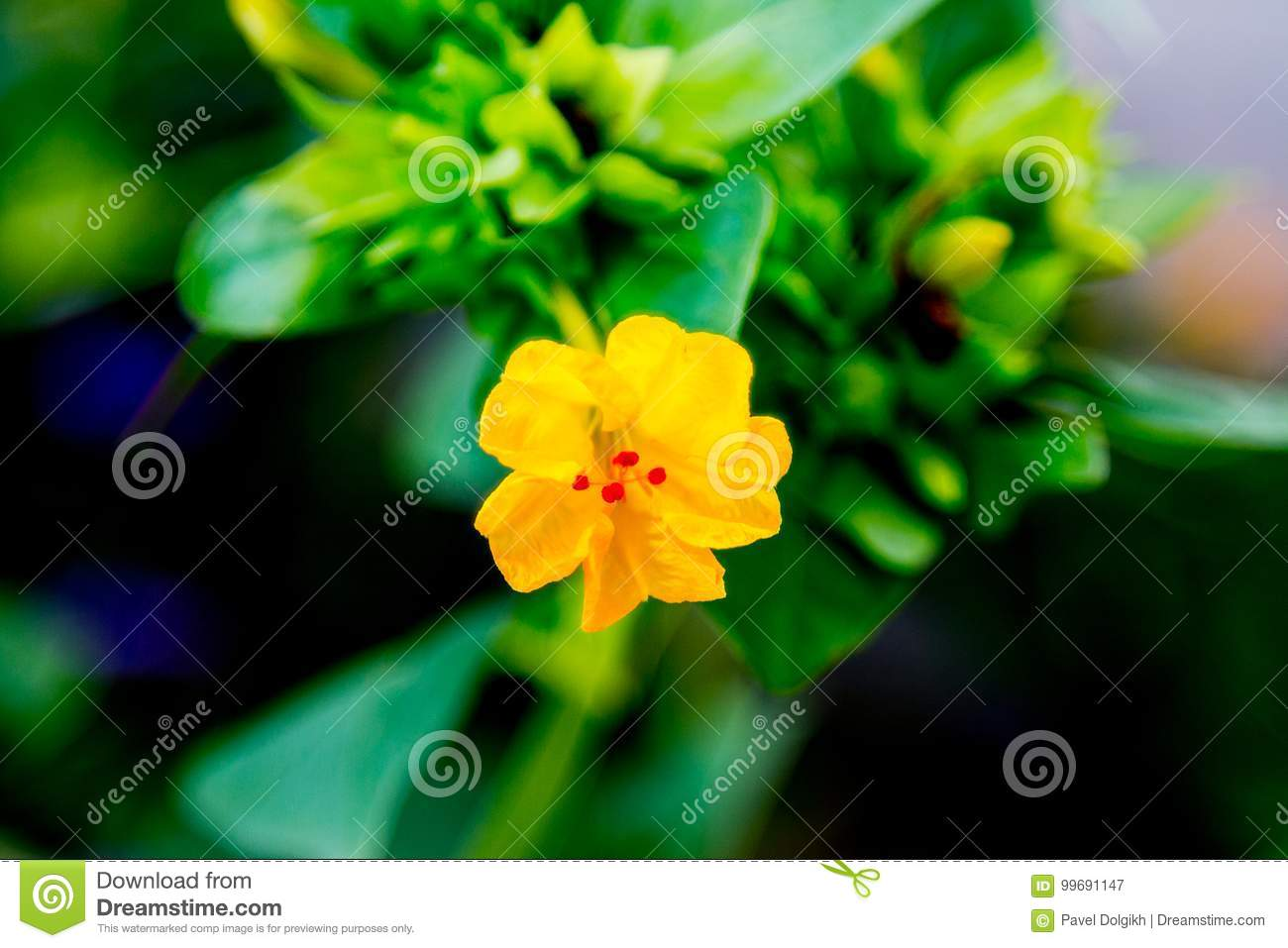 Yellow Flower With Red In The Center Stock Image Image Of Colorful