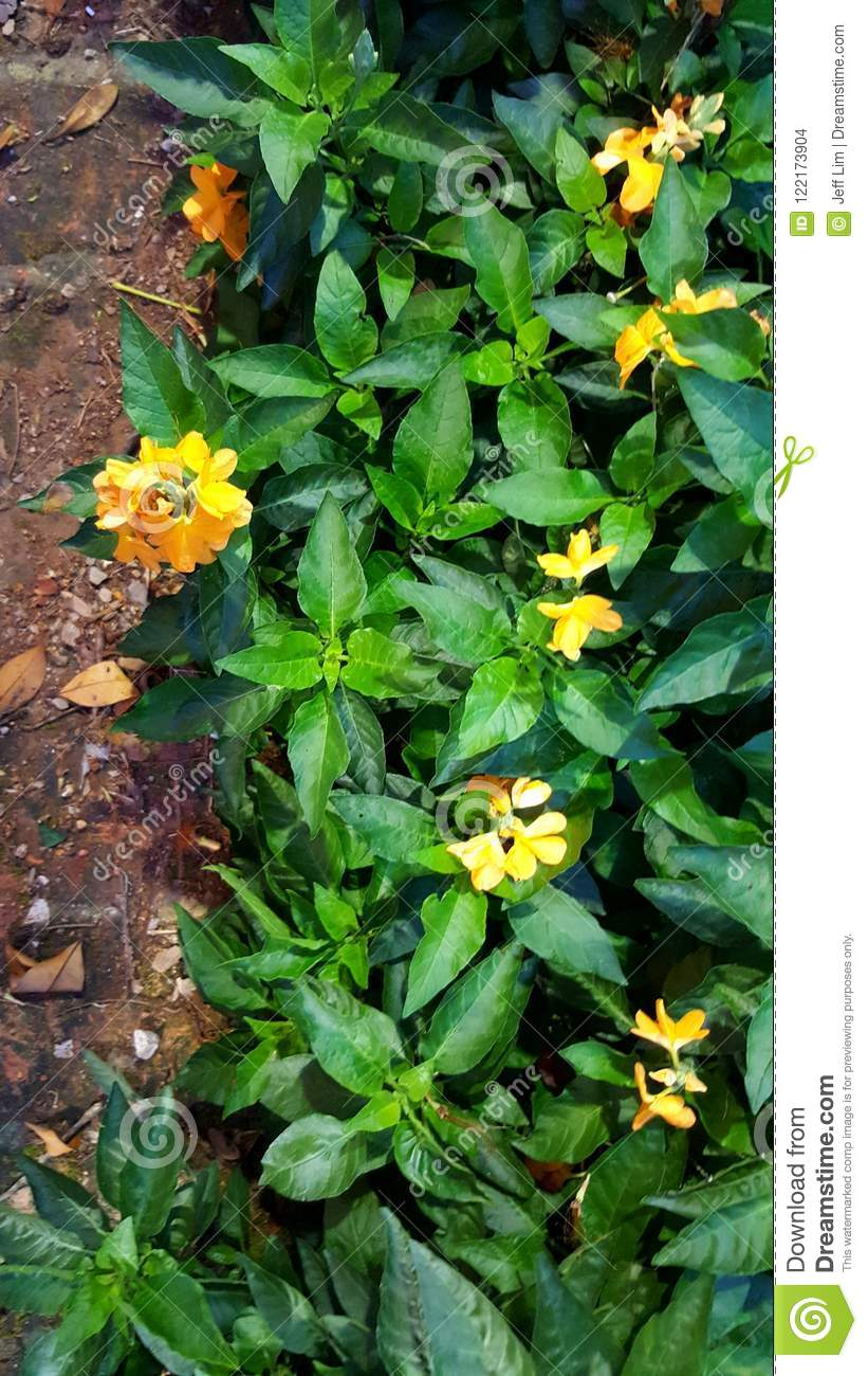 The Yellow Flower Stock Photo Image Of Yellowish Lovely 122173904