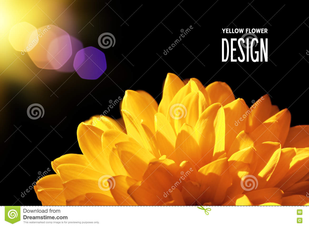 yellow flower in warm light on black background stock