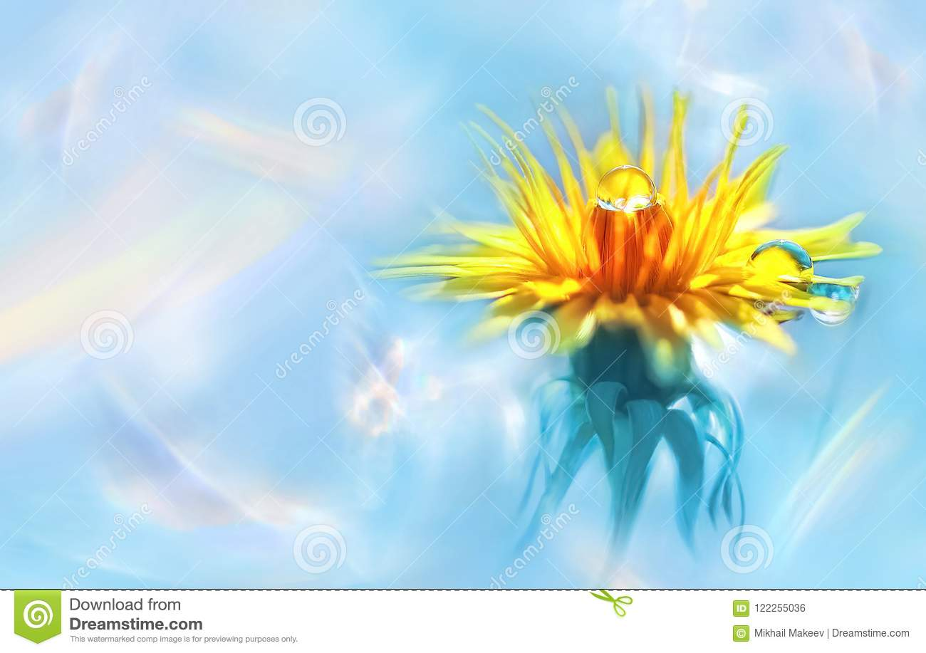 Yellow flower with water drops on petals. Natural summer spring image. Holographic abstract background