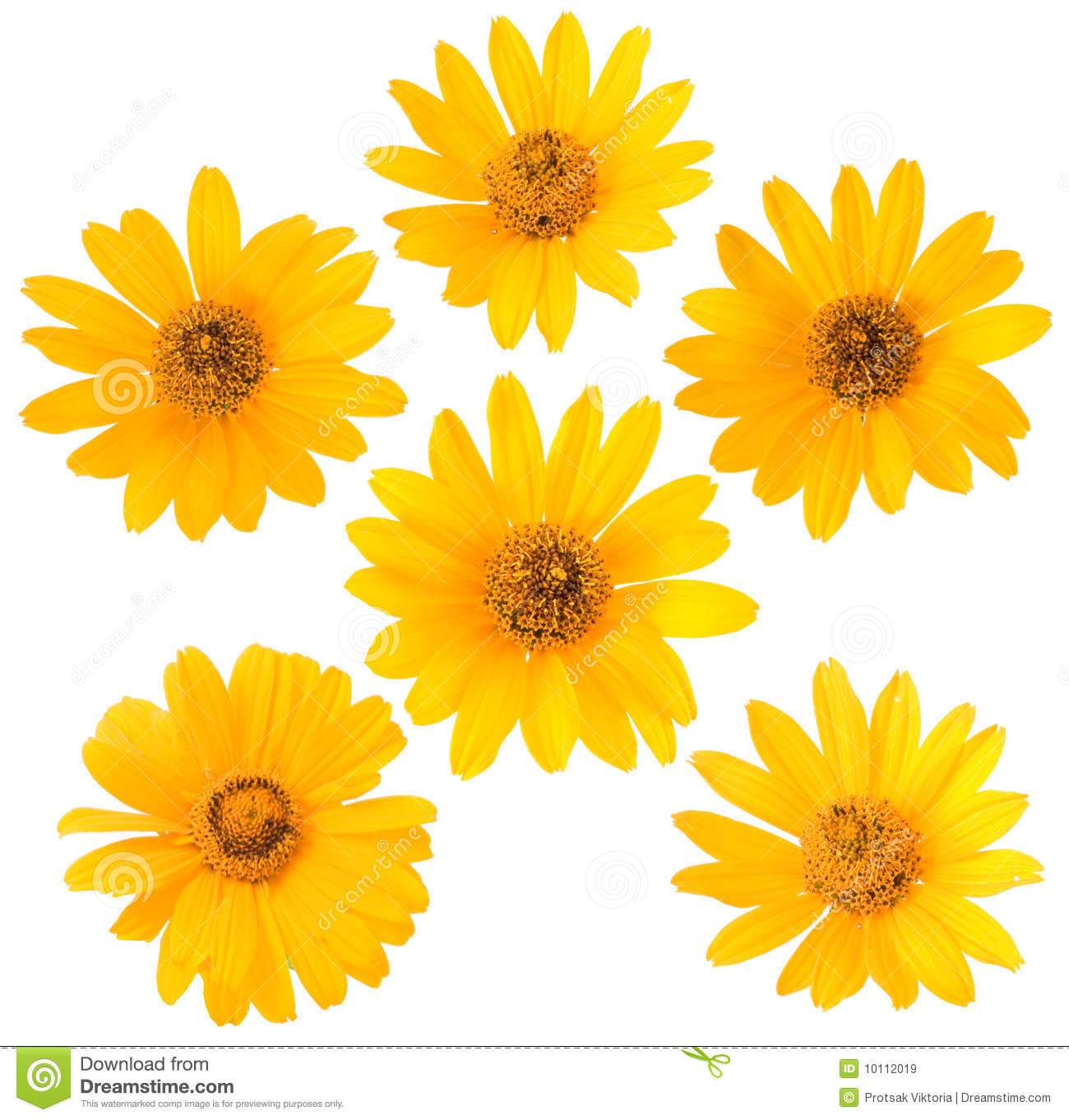 Yellow Flower On White Background Stock Image Image Of Fresh