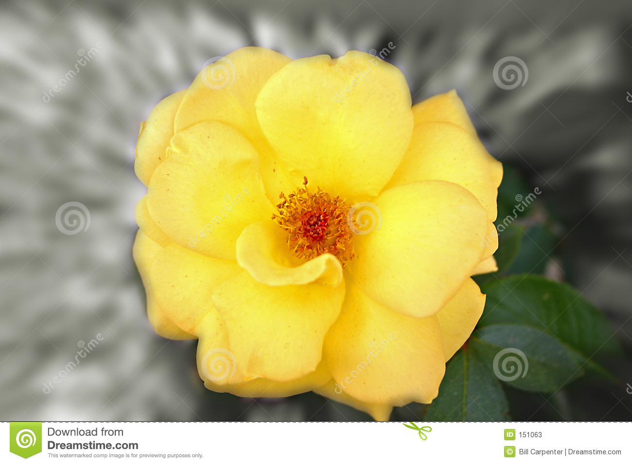 Yellow flower with zoom