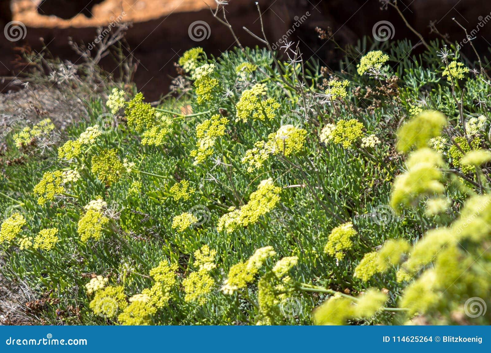 Yellow Flowering Shrubs Stock Photo Image Of Blooming 114625264