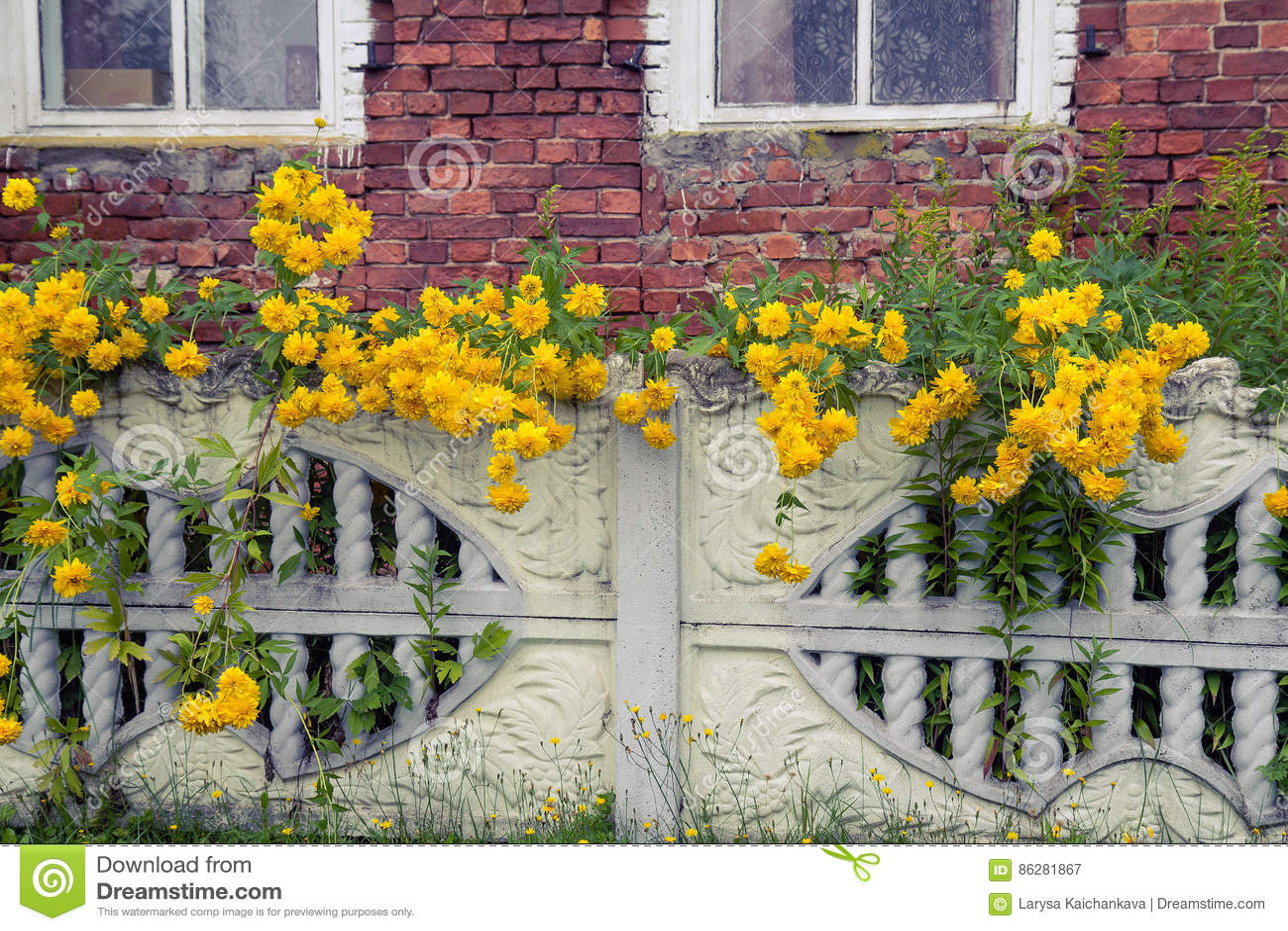 Yellow flowers in balls near the fence stock illustration download yellow flowers in balls near the fence stock illustration illustration of closeup mightylinksfo