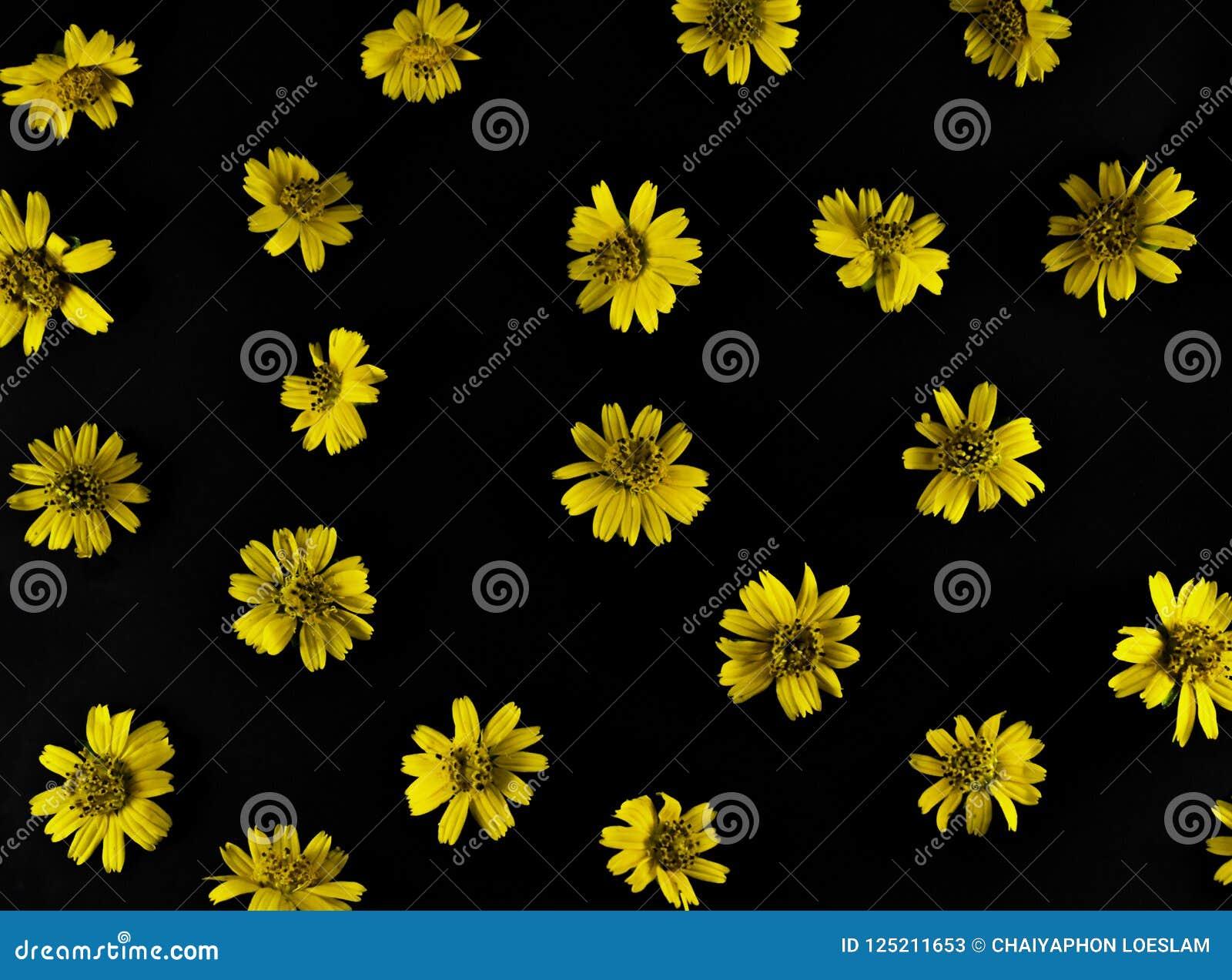 Yellow Flowers On Black Background Stock Image - Image of