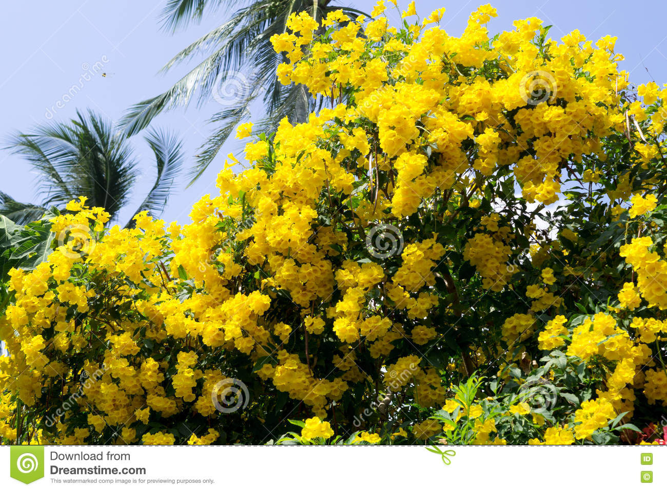 Yellow flowers bloom stock photo image of color nature 81066594 yellow flower tropical bloom and palm tree mightylinksfo Gallery