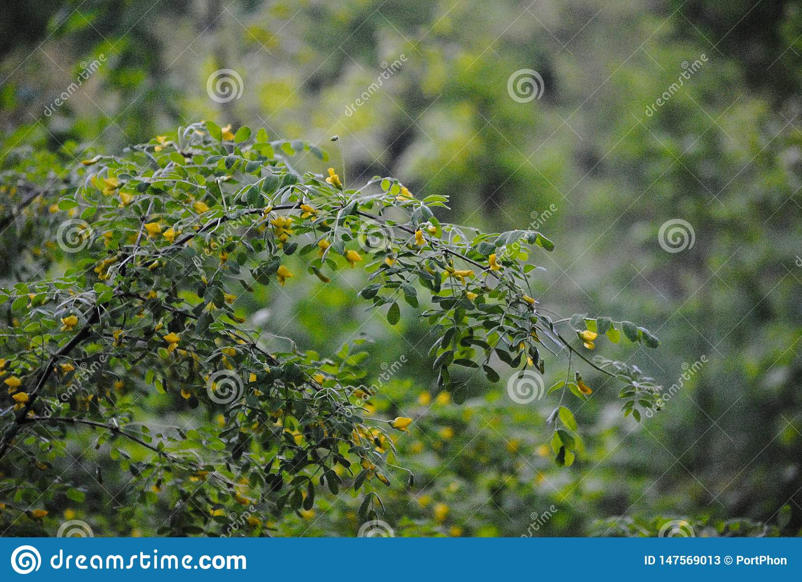 Yellow flowers on a branch