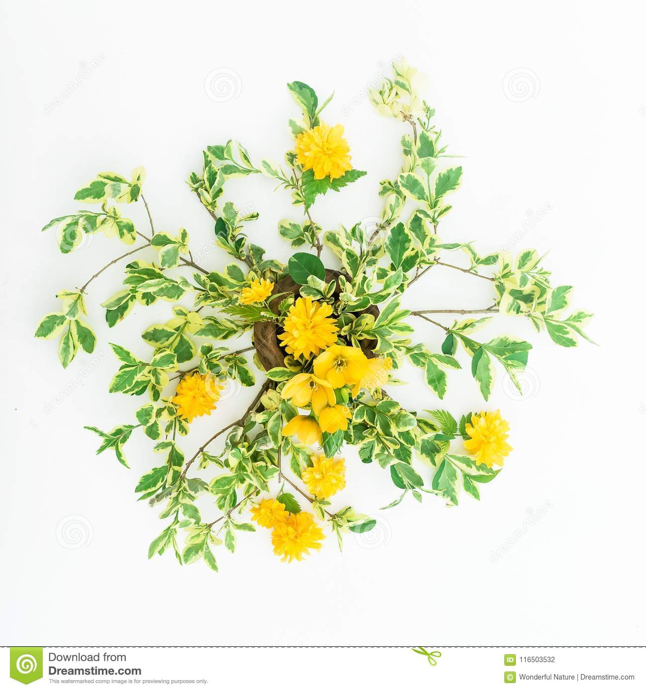 Yellow Flowers And Branches On White Background Flat Lay Top