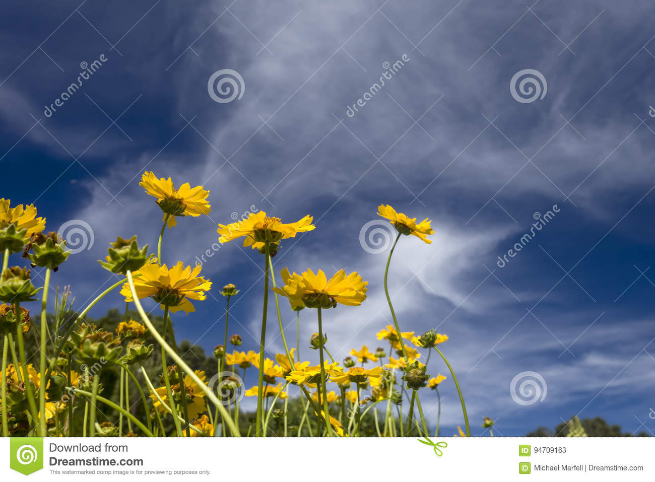 yellow flowers and clouds stock image. image of orange - 94709163