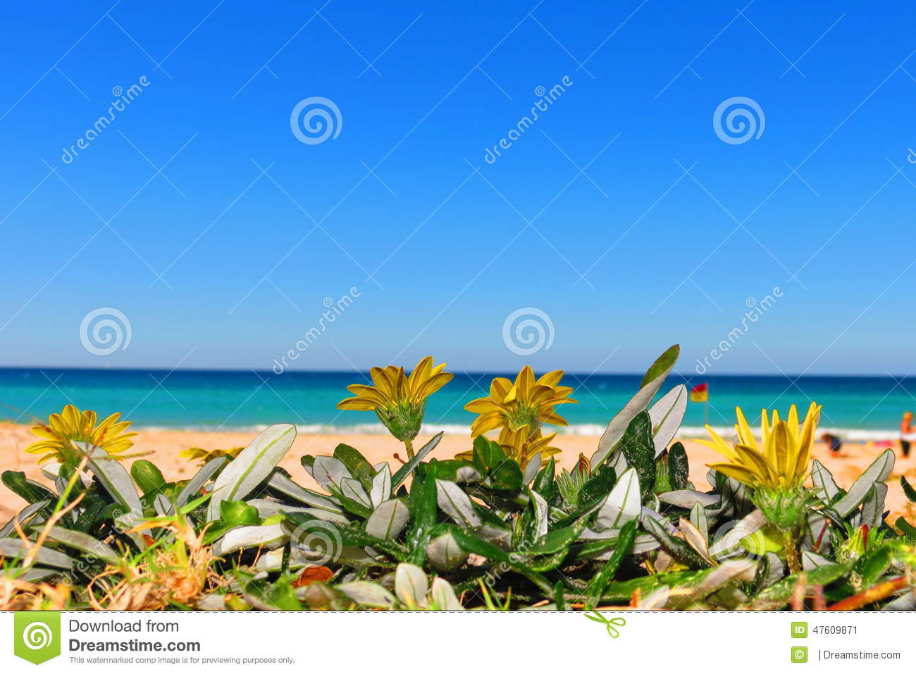 Yellow flowers by the coral sea stock image image of australia download yellow flowers by the coral sea stock image image of australia playa mightylinksfo