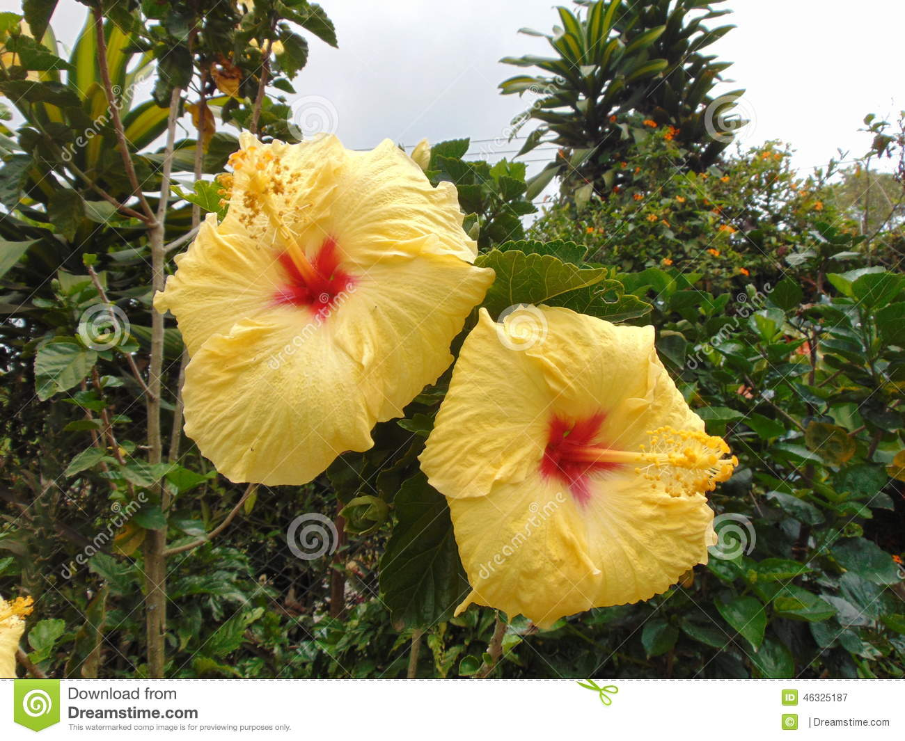 Yellow Flowers Exotic Garden Stock Image Image Of Colombia Flower