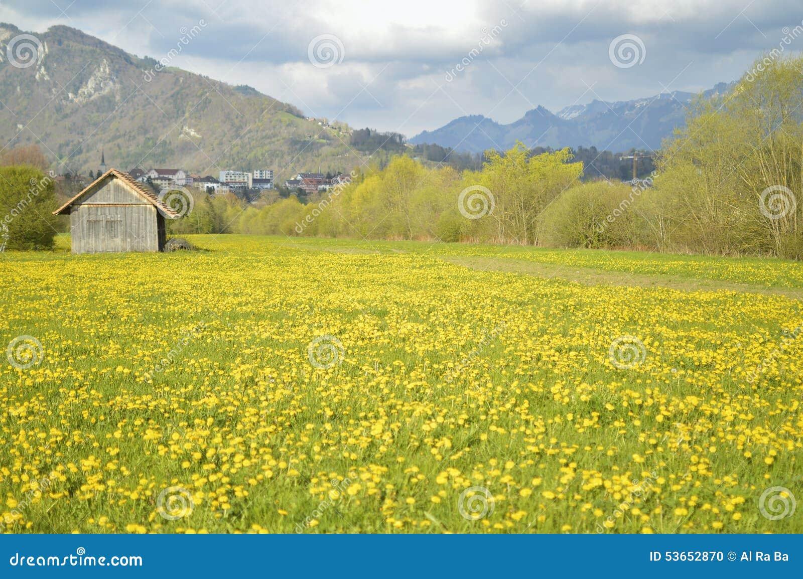 beautiful yellow field landscape - photo #8