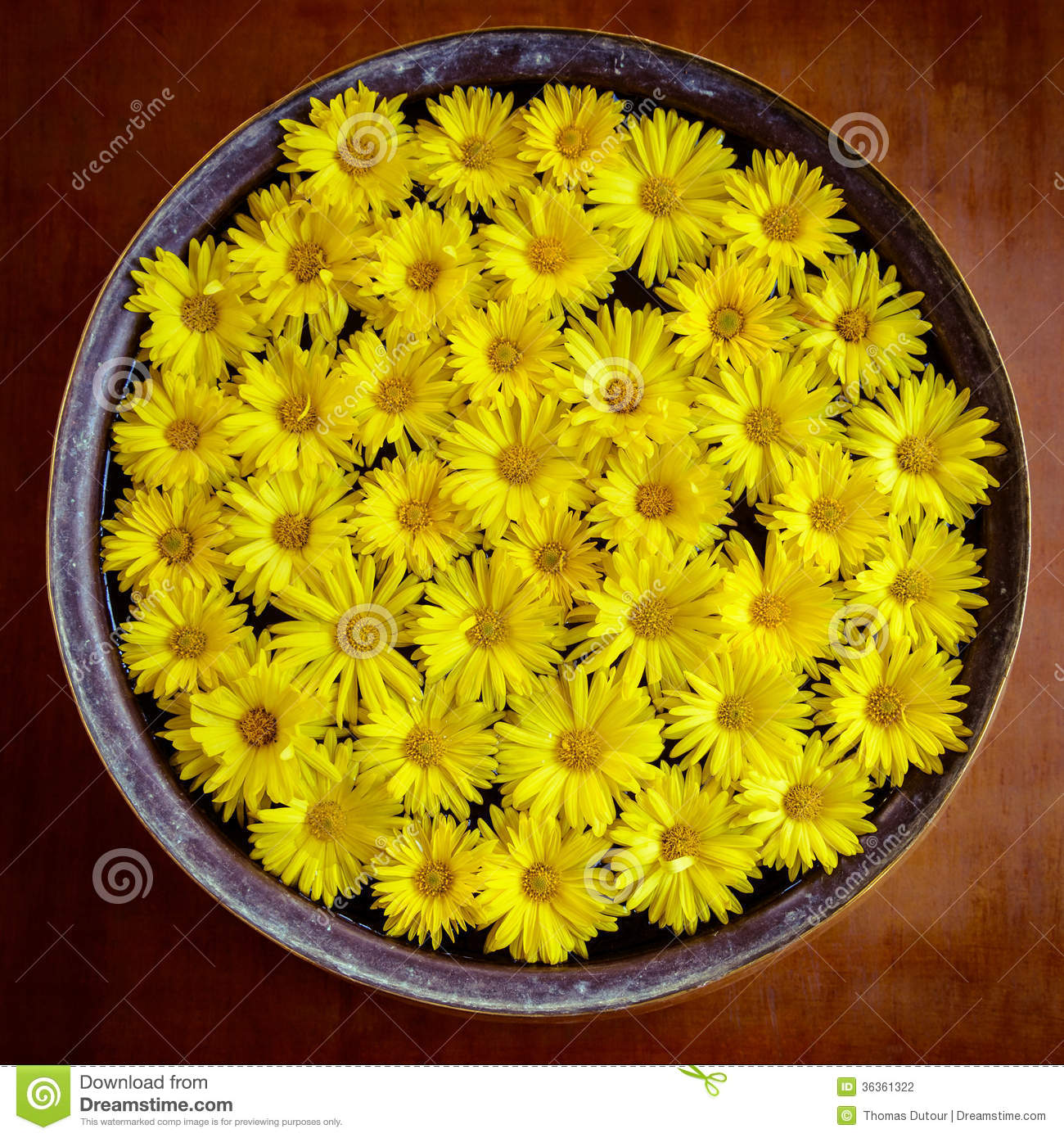 Yellow Flowers Stock Photo Image Of Season Flower Symbolic 36361322