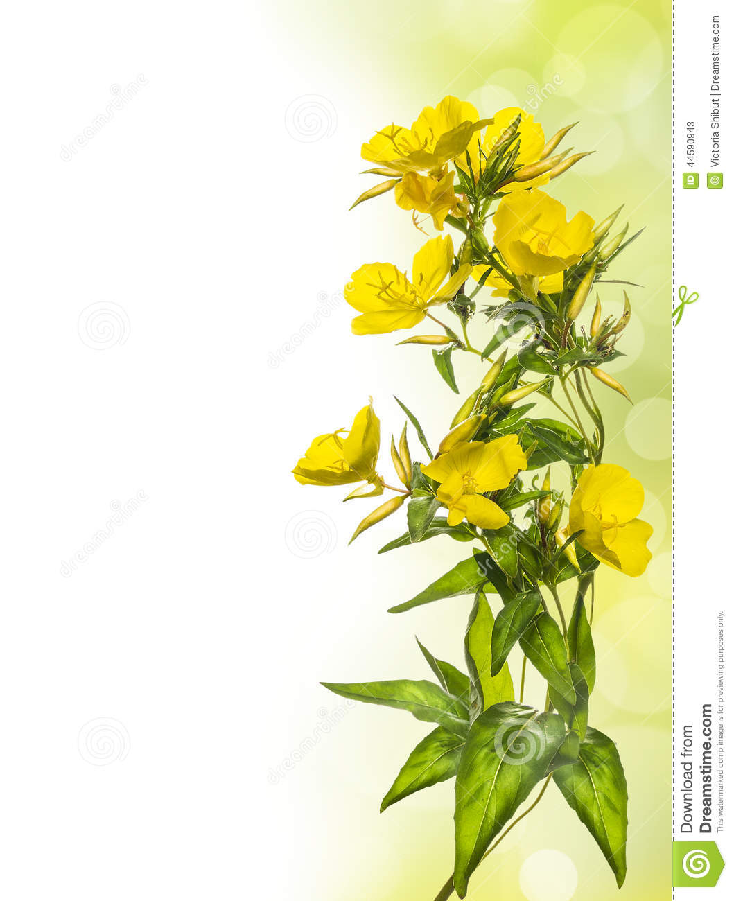 Yellow Flowers Floral Border Stock Image Image Of Empty Fresh