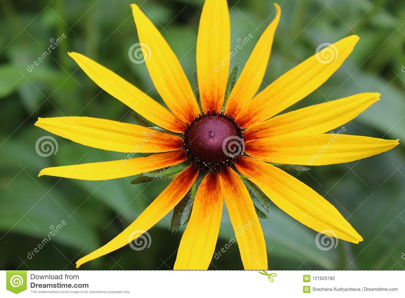 Yellow Flower On A Green Summer Background Stock Photo Image Of