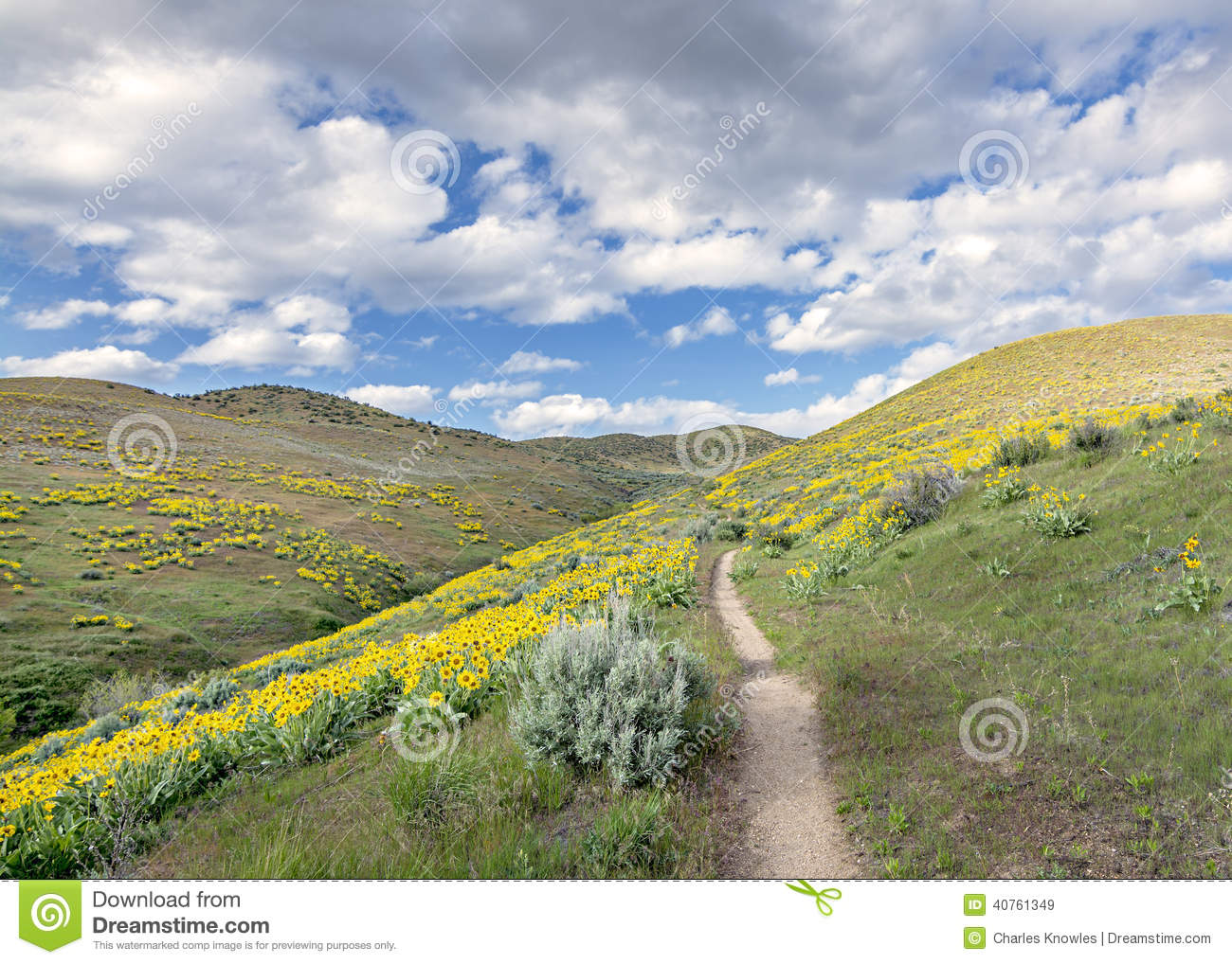 Yellow flowers in the foot hills of Idaho