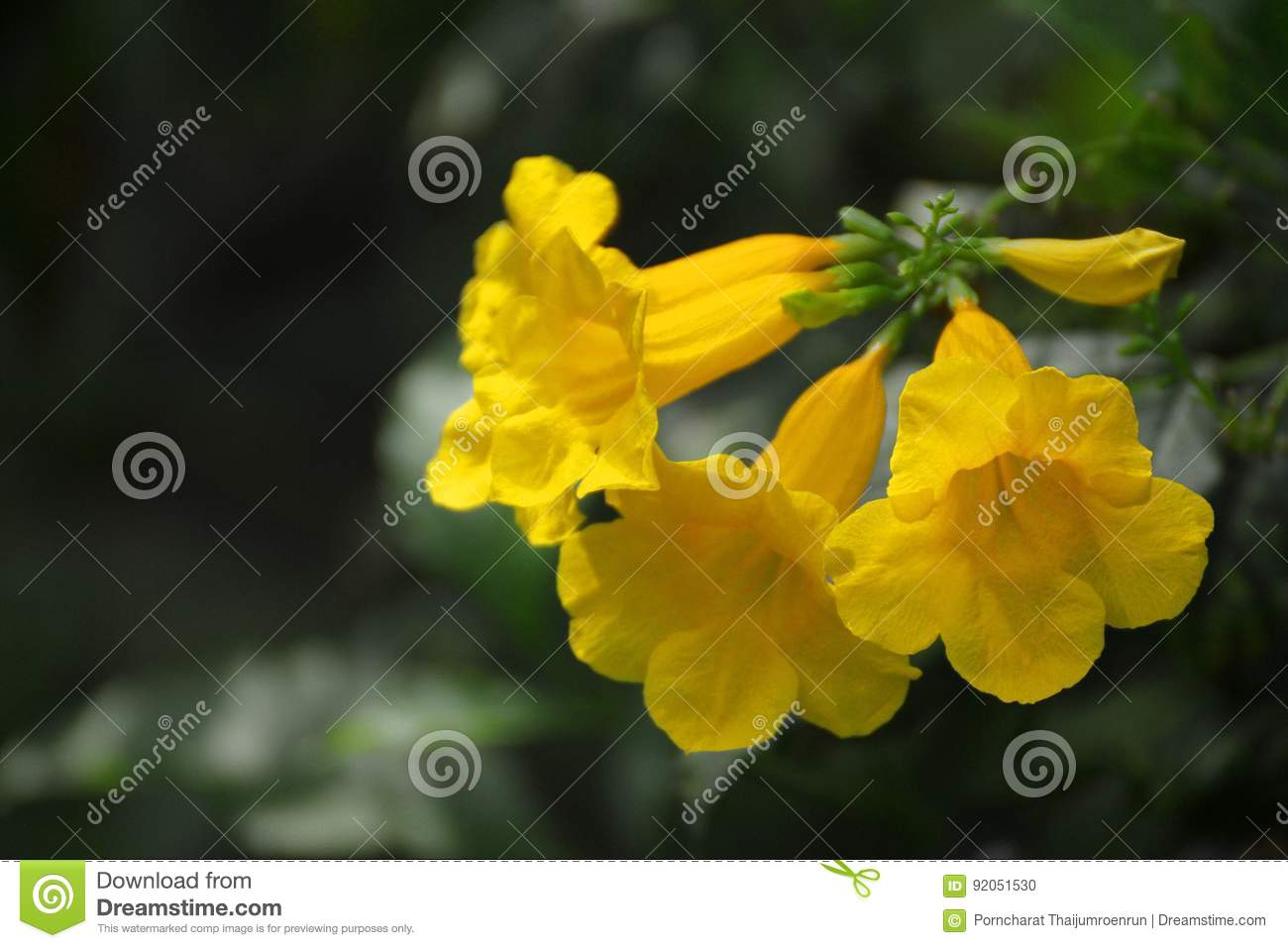 Yellow Flowers In The Garden Stock Illustration Illustration Of