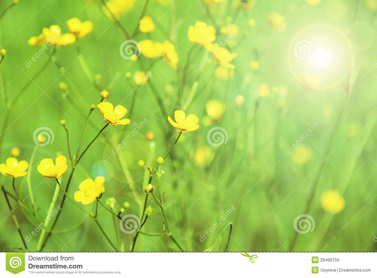 Yellow Flowers On A Green Background Stock Image Image Of
