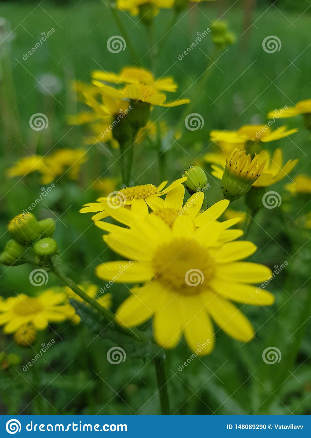 Yellow flowers on a green background.