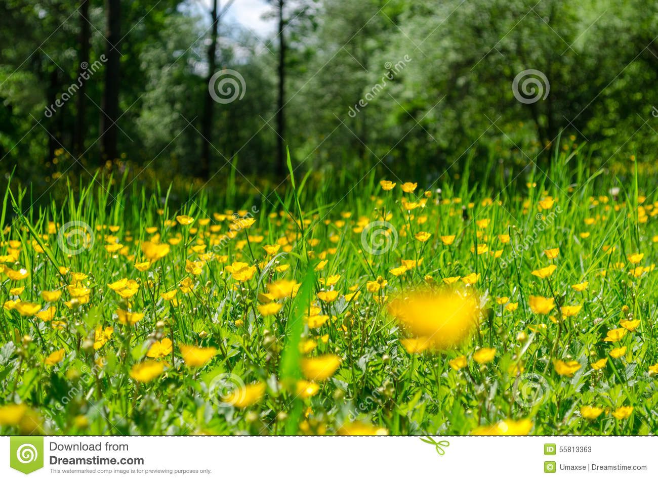 Yellow Flowers In Green Grass Close Up Stock Image Image Of Color