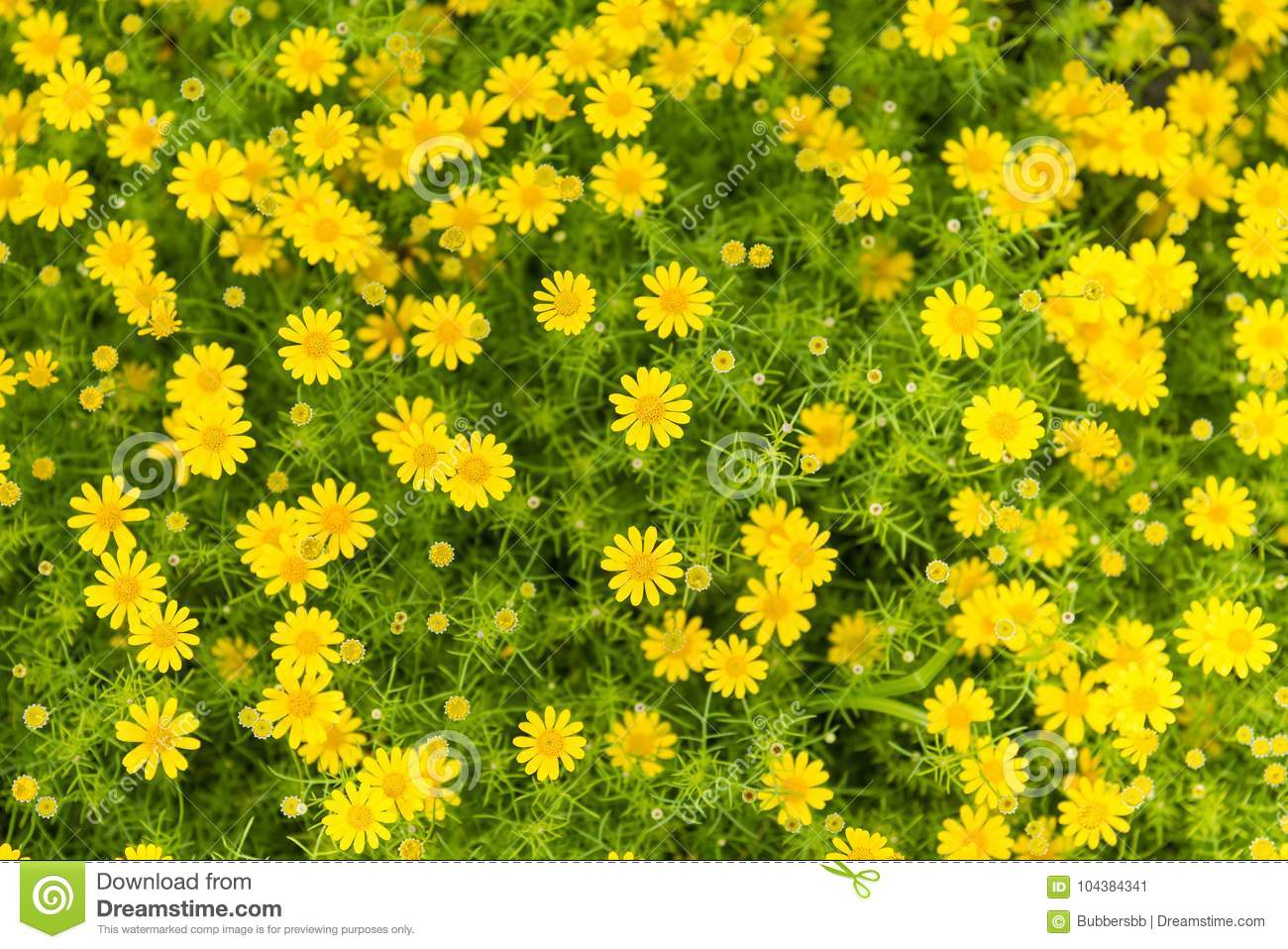 Yellow Flowers With Green Leaves Floorllow Flower Background