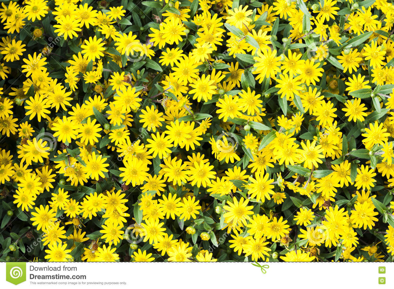Yellow Flowers On The Ground Stock Photo Image Of Flora Delivery