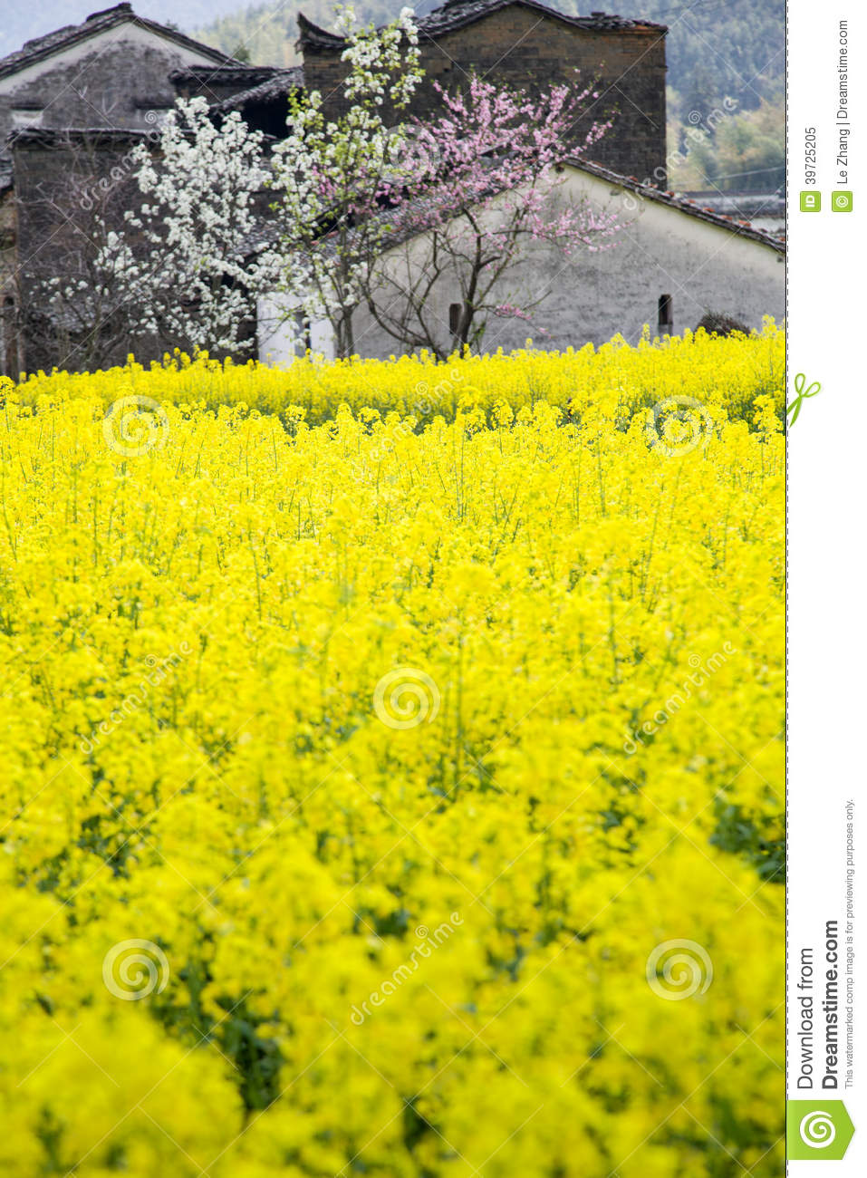 Yellow Flowers And House Stock Image Image Of Tree Blossom 39725205