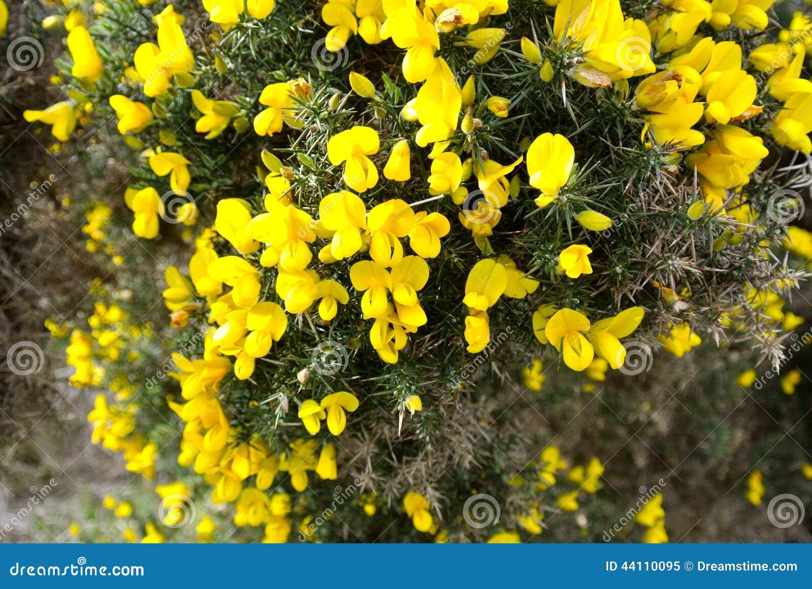 Yellow flowers ireland stock photo 44110095 megapixl yellow flowers ireland mightylinksfo