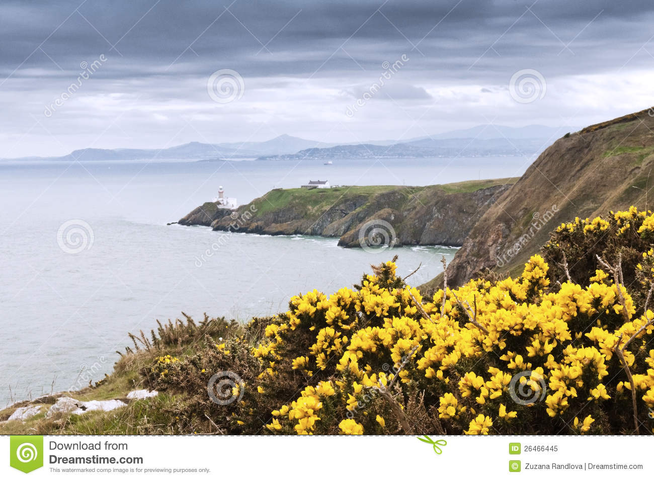 Yellow Flowers And The Lighthouse Ireland Stock Image Image Of