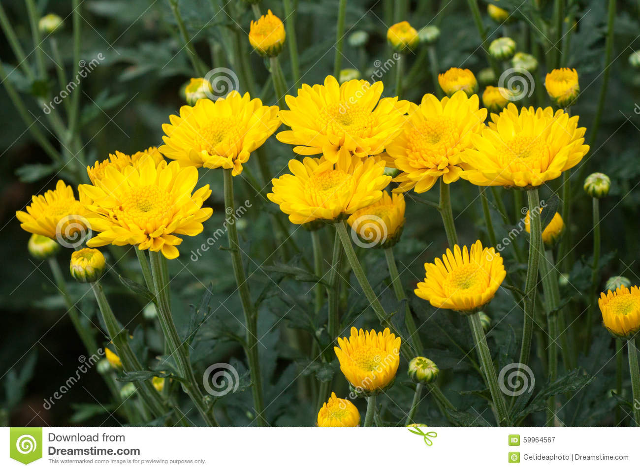 Yellow flowers names and pictures pictures of yellow flowers and their names impremedia mightylinksfo