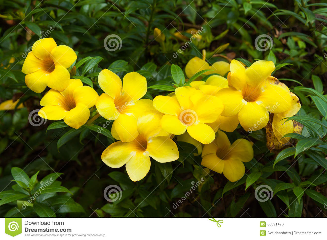 Yellow Flowers Stock Photo Image Of Cloudy Biologic 60891476
