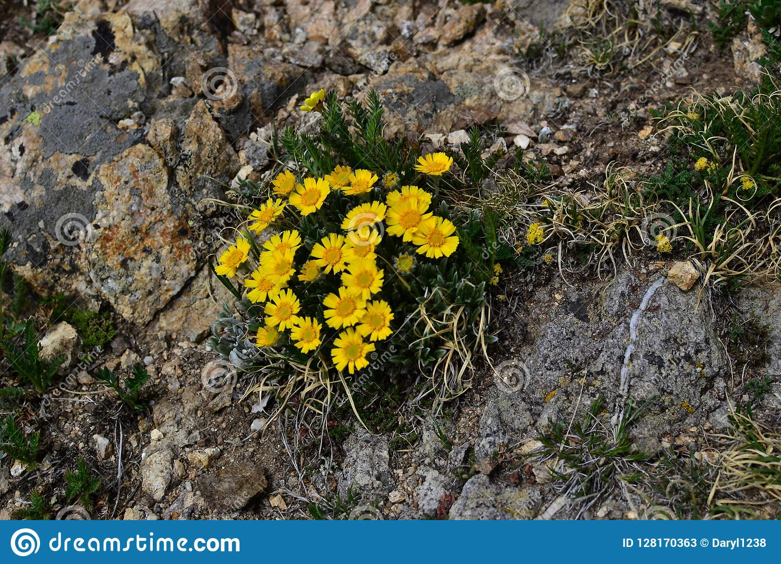 Yellow Flowers On A Mountain Path Stock Image Image Of Path