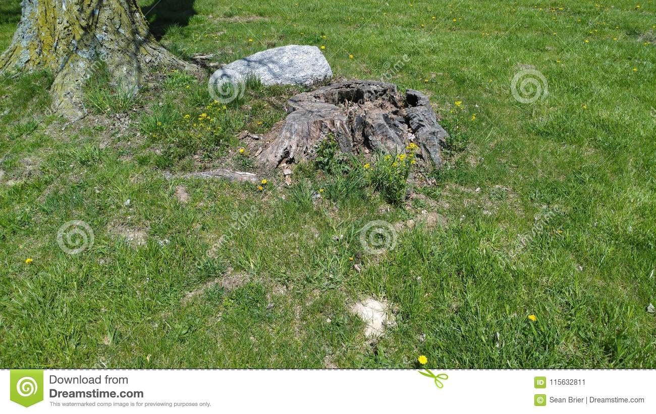 Yellow flowers next to tree stump and big rock stock image image yellow flowers next to tree stump and big rock mightylinksfo