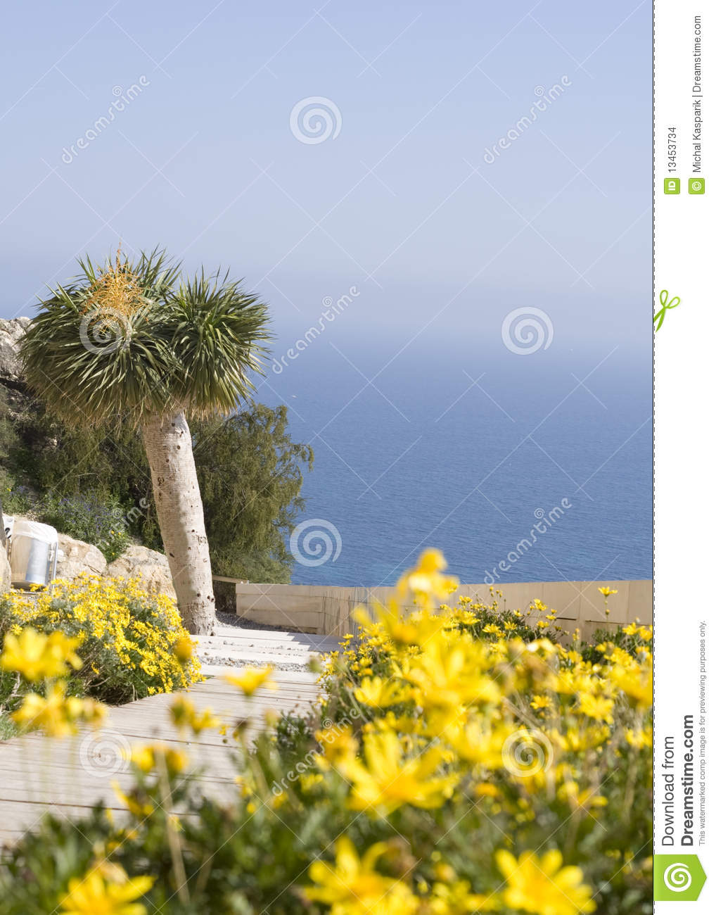 Yellow Flowers With Palmtree Stock Photo Image Of Alicante Bright