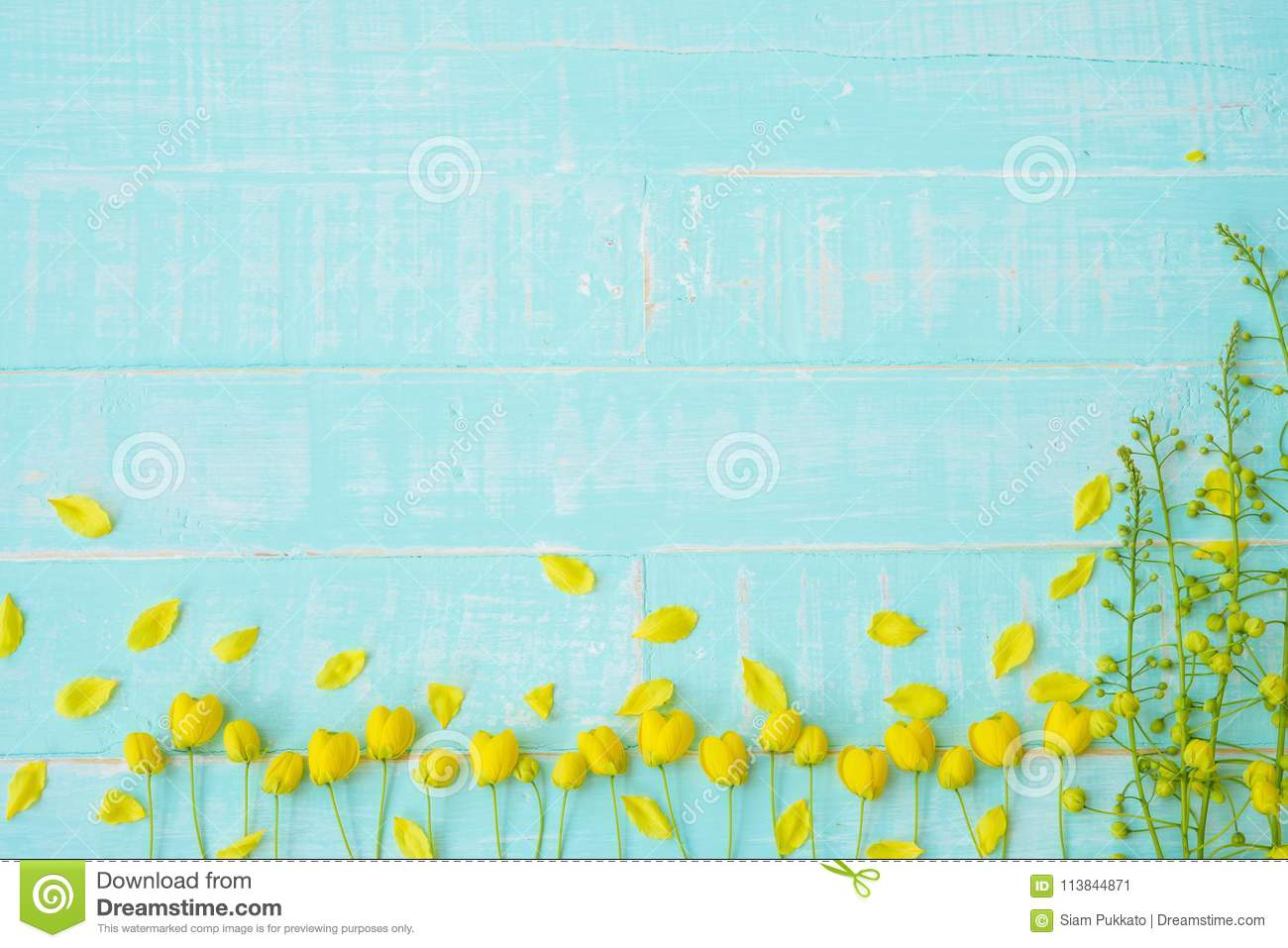 Yellow flowers on a pastel bright blue wooden background stock image download yellow flowers on a pastel bright blue wooden background stock image image of pastel mightylinksfo