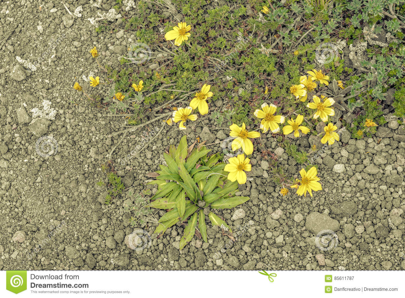Yellow Flowers And Plants Top View Stock Image Image Of Nature