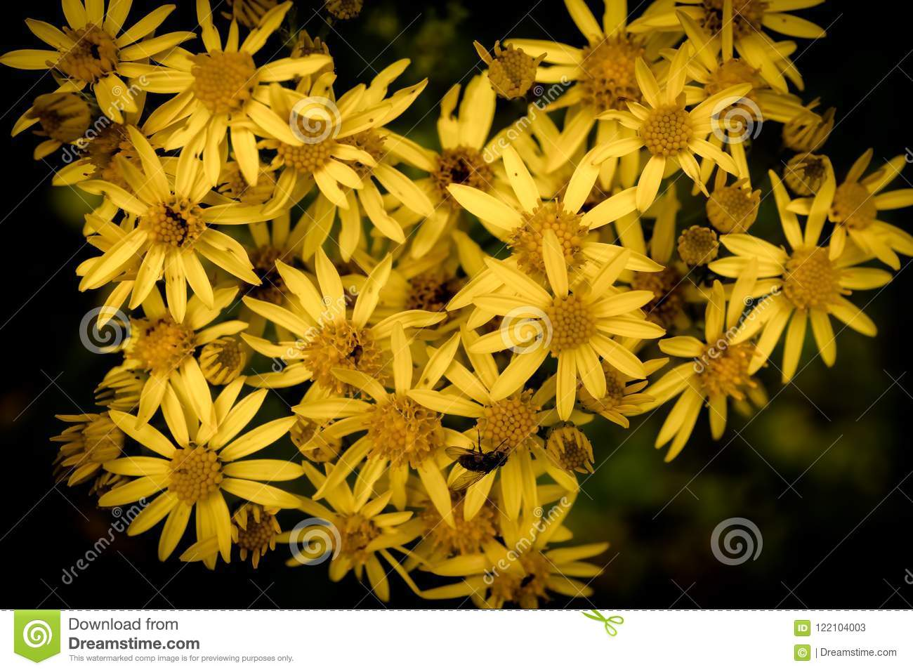 Yellow Flowers Shaped Like A Heart Stock Image Image Of Background