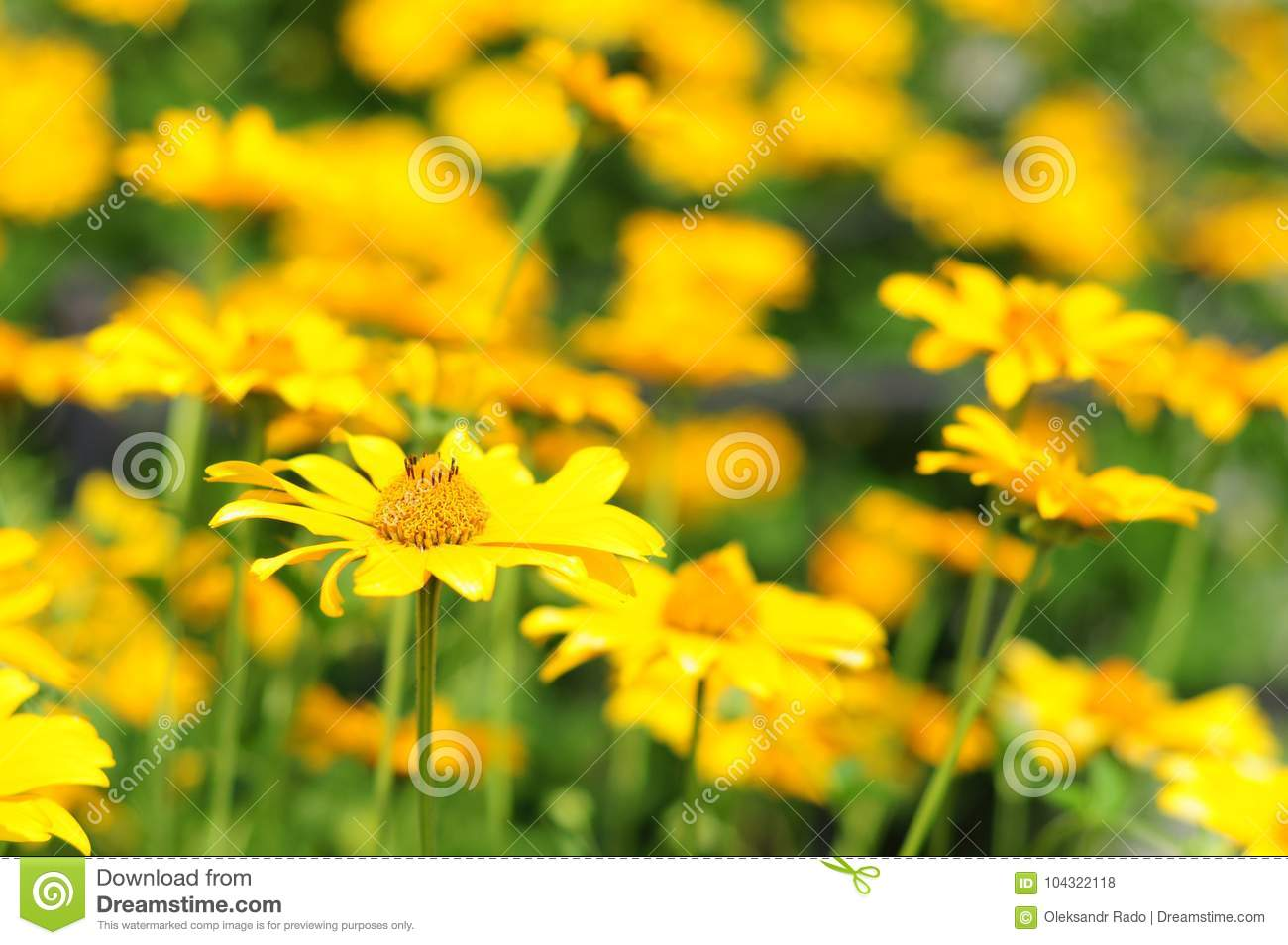 Yellow Flowers With Soft Focus Yellow Flowers With Colorful Soft