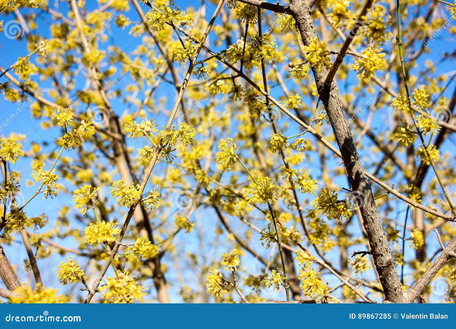 Pianta Fiori Gialli Primavera.Yellow Flowers In Spring Stock Image Image Of Beautiful 89867285