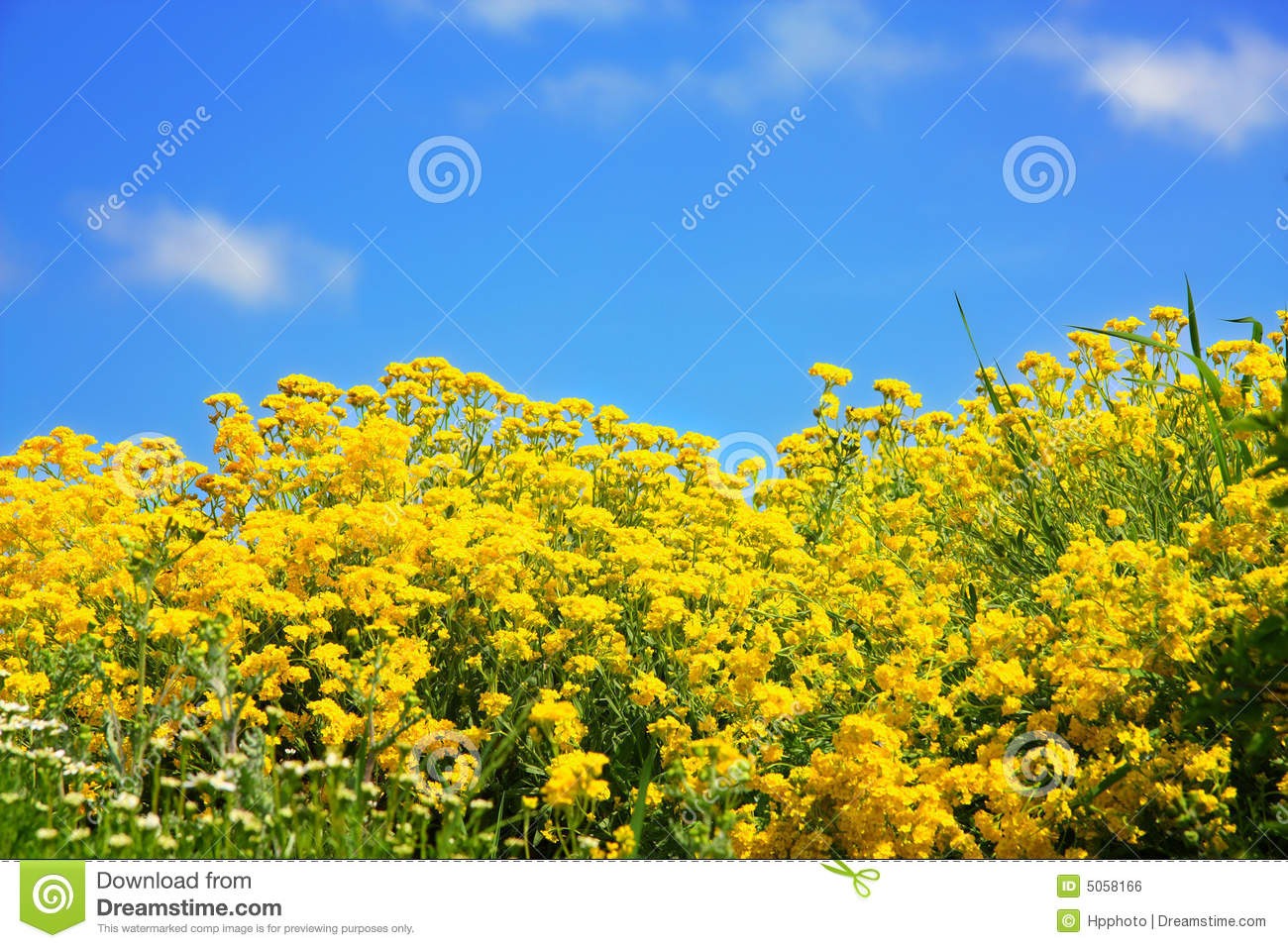 flowers spring field yellow -#main