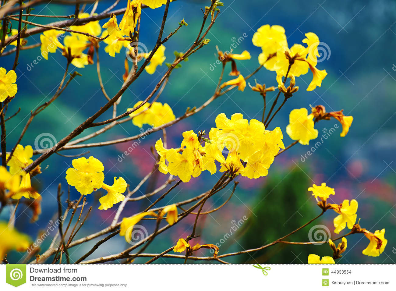 Yellow Flowers In Spring Stock Photo Image Of Beautiful 44933554