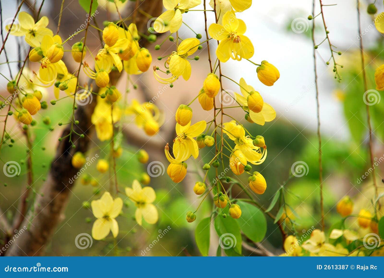 Yellow flowers tree stock image image of color tree 2613387 mightylinksfo